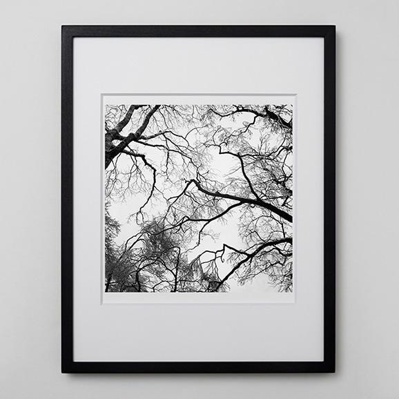 【写真】林 雅之 「BW Forest001」
