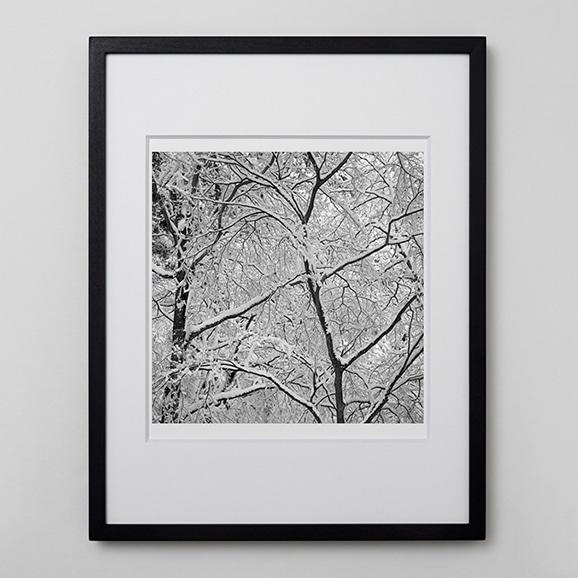 【写真】林 雅之 「BW Forest002」