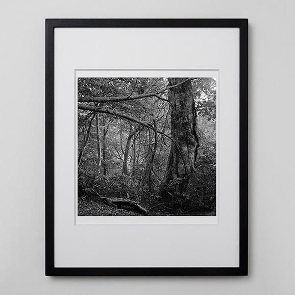 【写真】林 雅之 「BW Forest003」