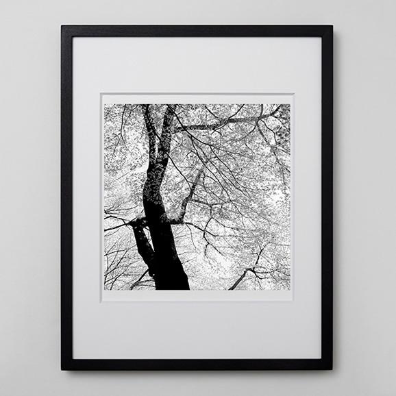 【写真】林 雅之 「BW Forest004」