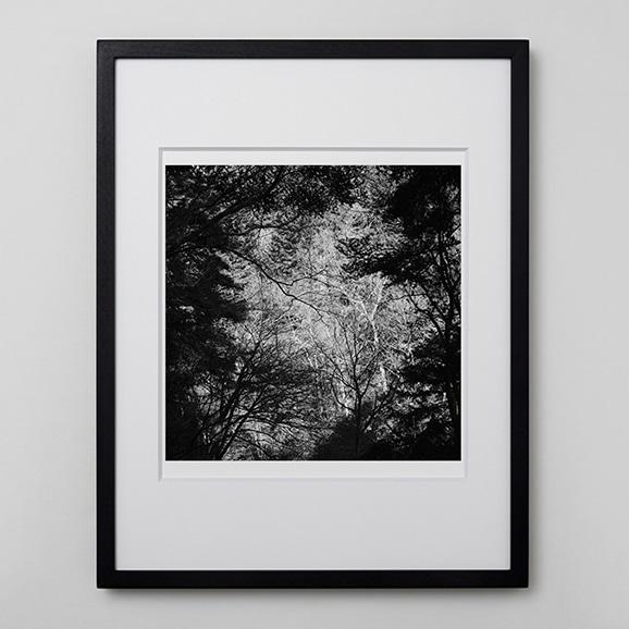 【写真】林 雅之 「BW Forest005」