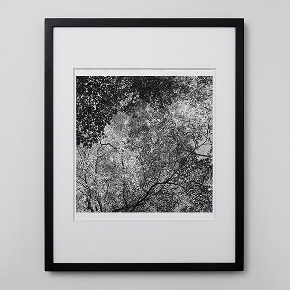 【写真】林 雅之 「BW Forest006」