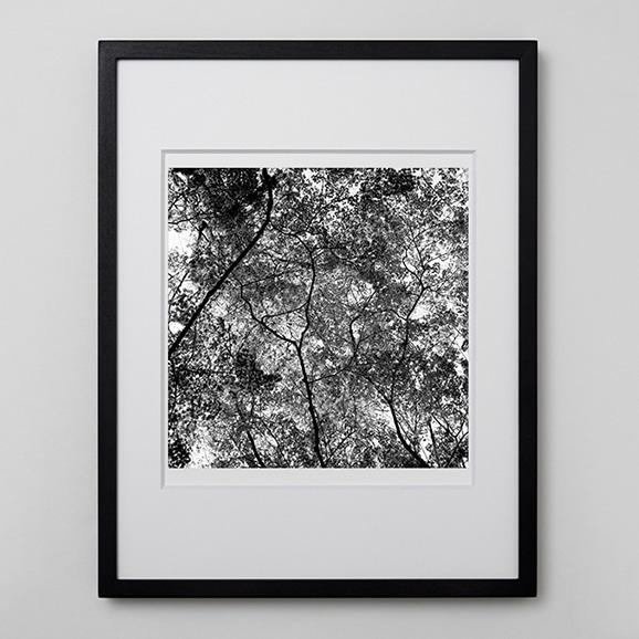 【写真】林 雅之 「BW Forest007」