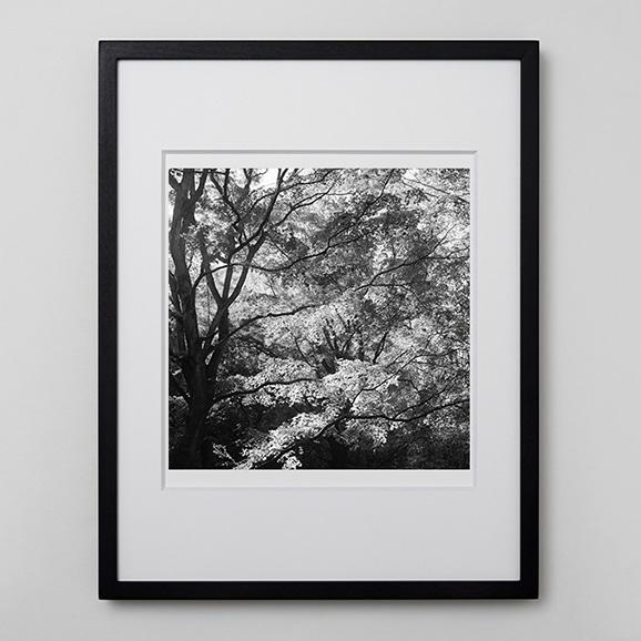 【写真】林 雅之 「BW Forest008」