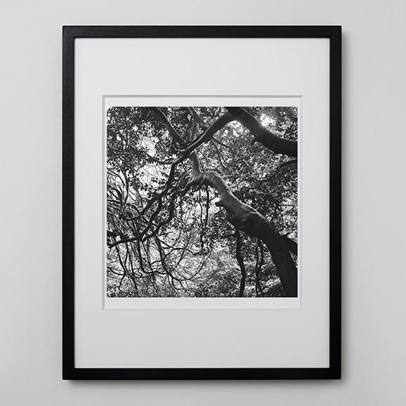 【写真】林 雅之 「BW Forest009」