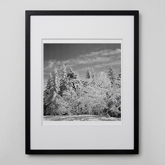 【写真】林 雅之 「BW Forest010」