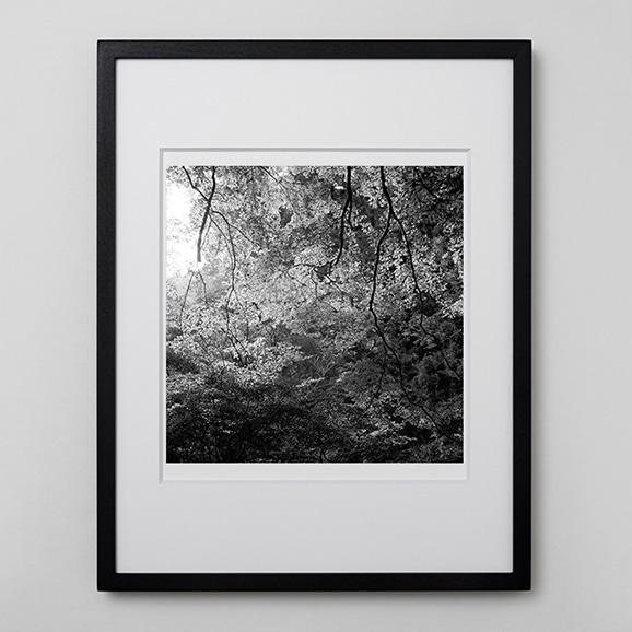 【写真】林 雅之 「BW Forest012」
