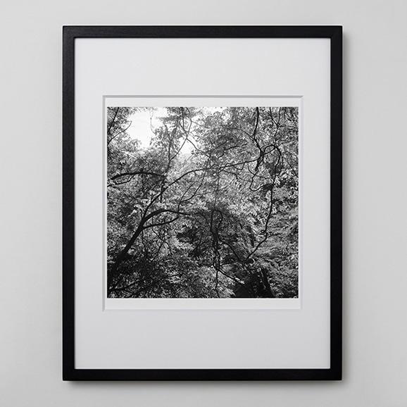 【写真】林 雅之 「BW Forest013」