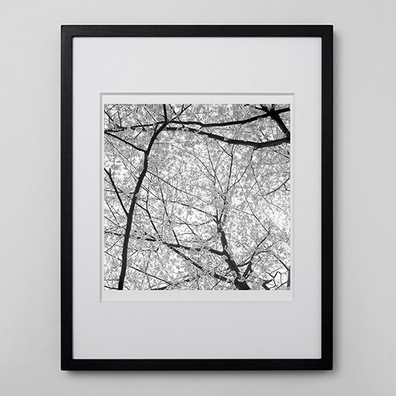 【写真】林 雅之 「BW Forest014」