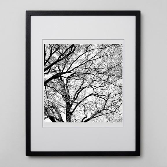 【写真】林 雅之 「BW Forest015」