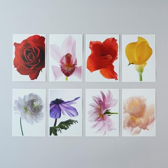 【写真】林 雅之 Living Flowers ポストカードセット