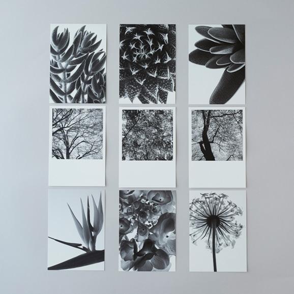 【写真】林 雅之 BLACK AND WHITE ポストカードセット