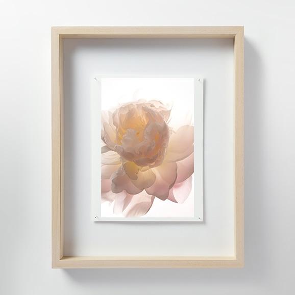 【写真】林 雅之 「LF021 Paeonia シャクヤク」
