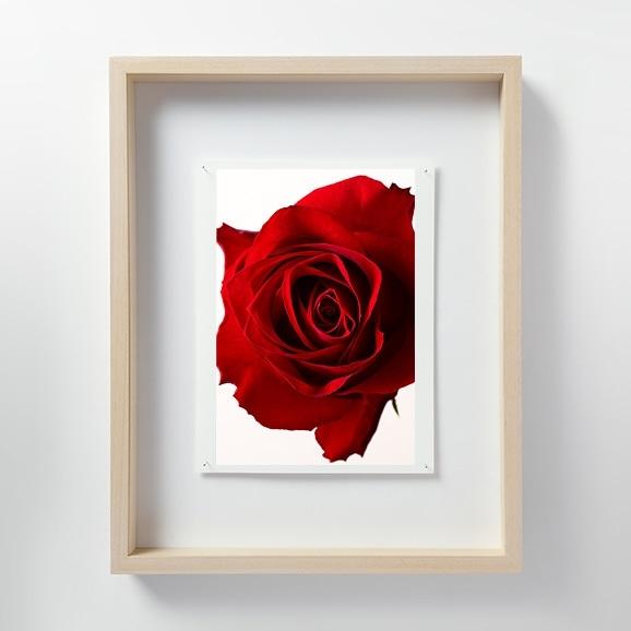 【写真】林 雅之 「LF052 Rose バラ」