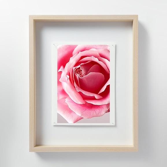 【写真】林 雅之 「LF053 Rose バラ」