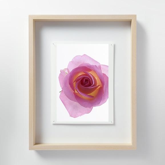 【写真】林 雅之 「LF059 Rose バラ」