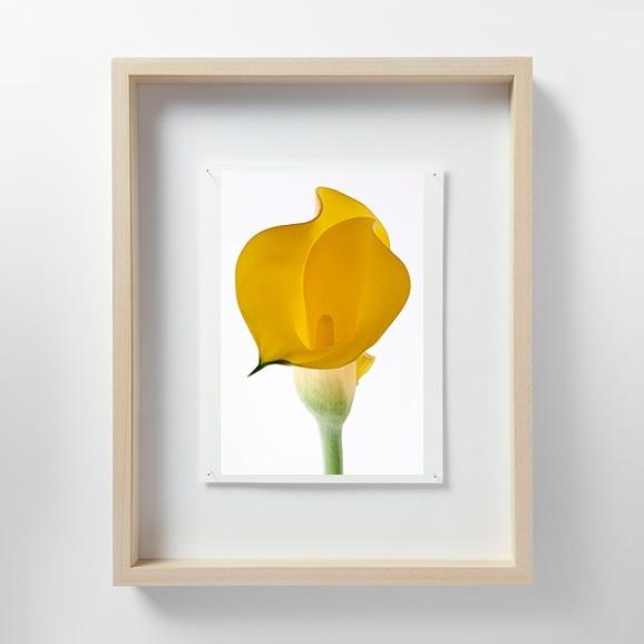 【写真】林 雅之 「LF060 Calla lily カラー」
