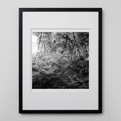 林 雅之 「BW Forest012」