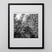 林 雅之 「BW Forest013」
