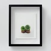 林 雅之 「NT13 Sempervivum 'Gloriosum'」