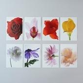 林 雅之 Living Flowers ポストカードセット
