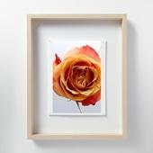 林 雅之 「LF041 Rose バラ」