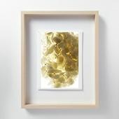 林 雅之 「LF051 Hydrangea アジサイ」