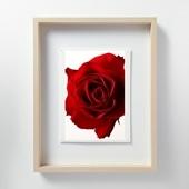 林 雅之 「LF052 Rose バラ」