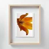林 雅之 「LF054 Tulipa チューリップ」