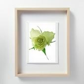 林 雅之 「LF058 Rose バラ」