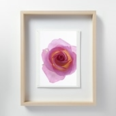 林 雅之 「LF059 Rose バラ」