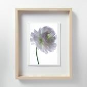 林 雅之 「LF061 Ranunculus ラナンキュラス」